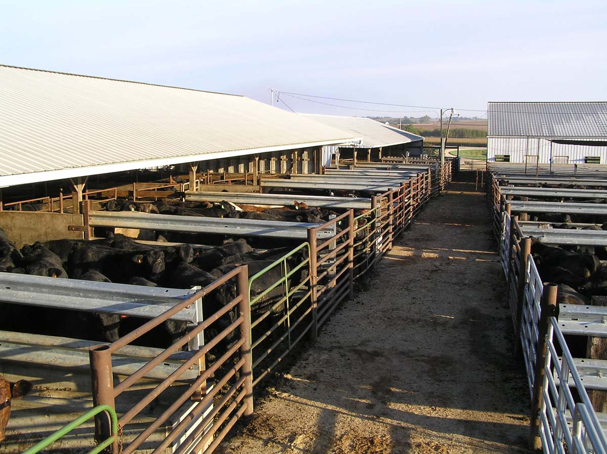 Cascade Livestock Auction